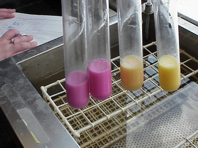 digestive enzymes experiment